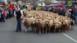 sheep in red socks