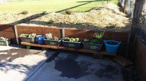 garden sleeper with my planting