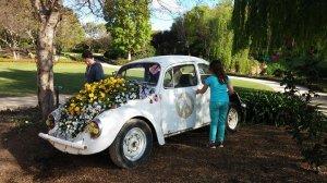 vw beetle garden