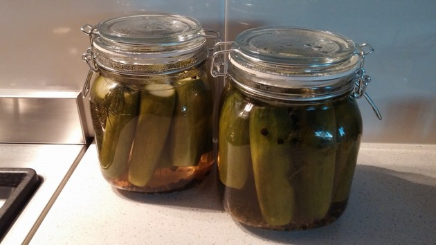 pickled cucmbers day 1