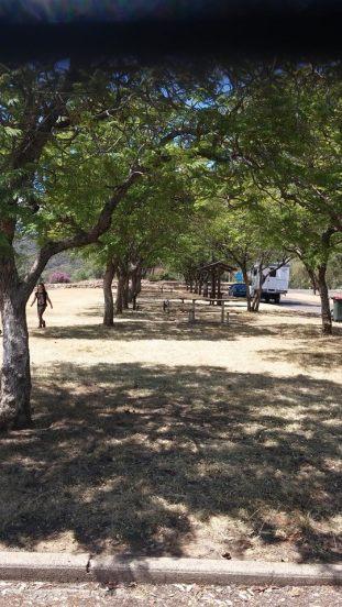 jacarandas at oxley lookout