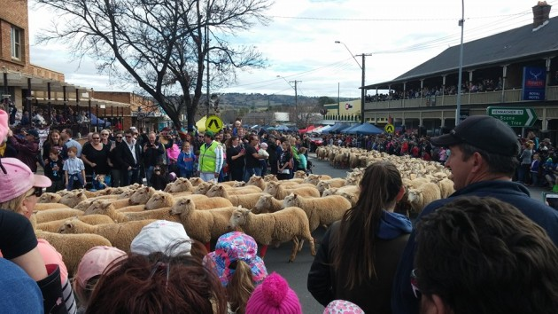 running of the sheep
